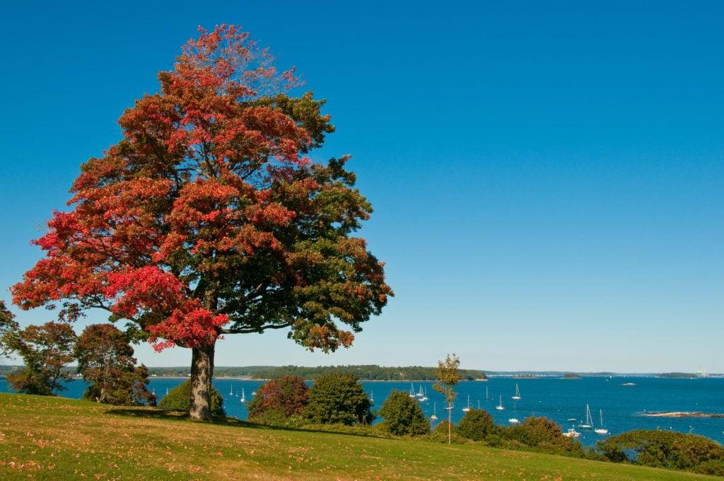 Multi-color tree in Portland's Back Cove